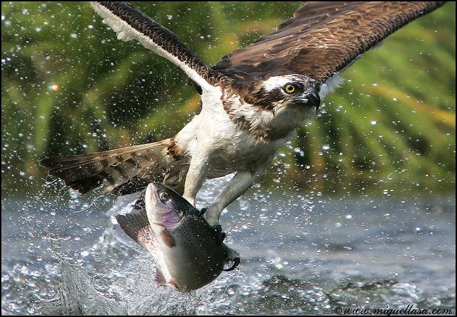 pesca1.jpg